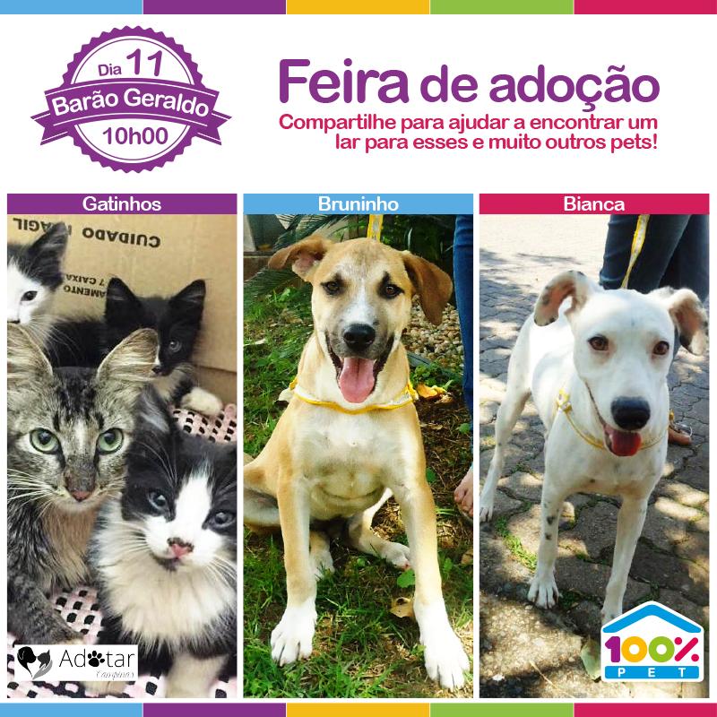 Feira de adoção junto a ONG Adotar Campinas - 100% Pet
