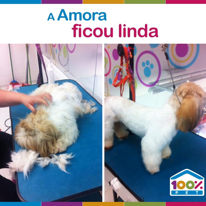 Cliente Amora ficando mais linda na 100% Pet