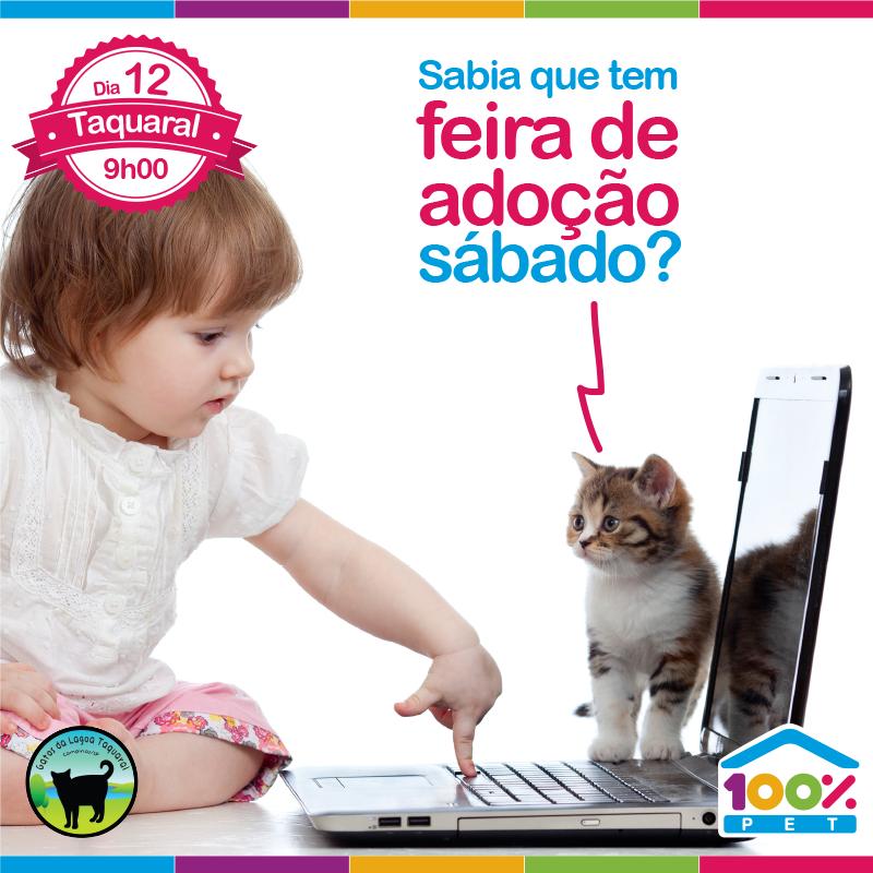 Feira de adoção - Gatinhos