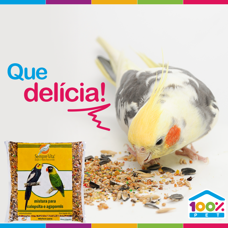 Melhores produtos para pássaros