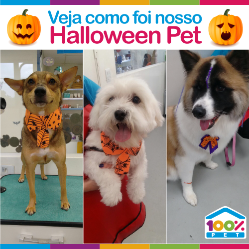 Halloween Pet - São Bernardo do Campo