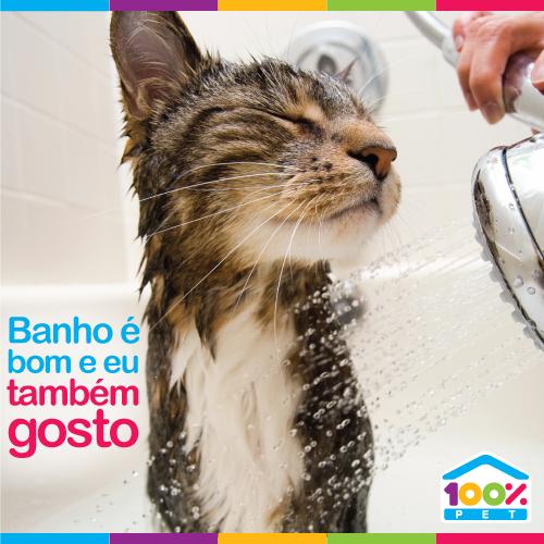 Banho & Tosa para gatinhos