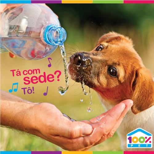 Seu pet também sente sede