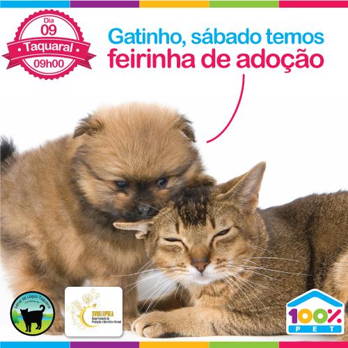 Feira de Adoção - Gatos da Lagoa e DPBEA SVDS
